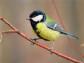 Весеннее путешествие в птичье королевство
