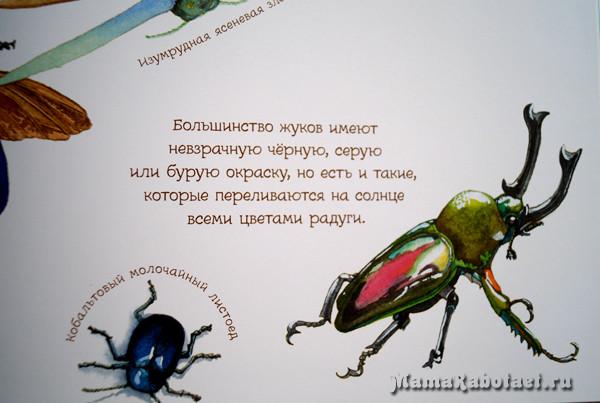 pogruzhenie-v-mir-zhukov-i-babochek (7)