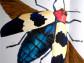 Погружение в мир жуков и бабочек